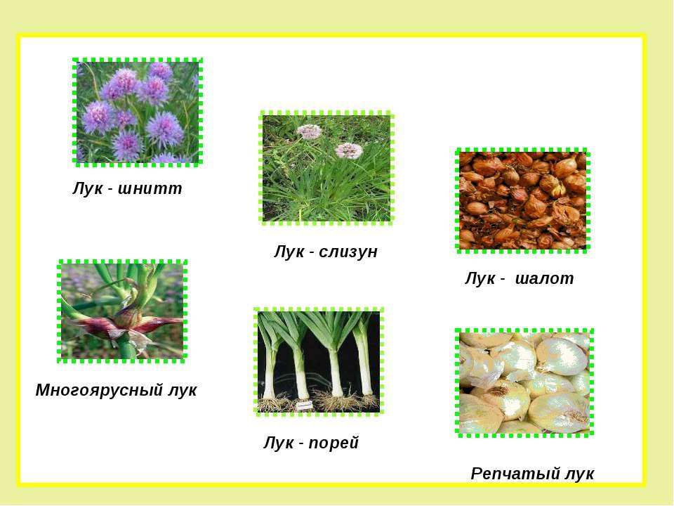 http://uslide.ru/images/10/16765/960/img5.jpg