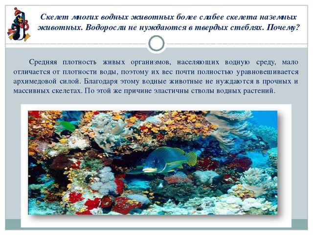 Скелет многих водных животных более слабее скелета наземных животных. Водорос...