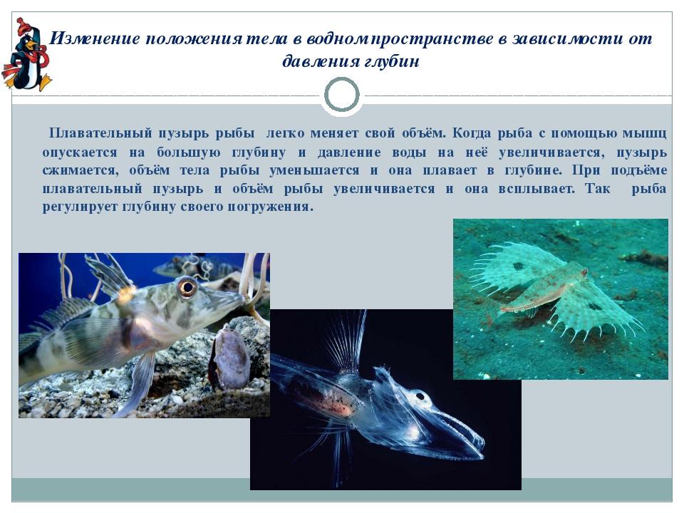 Изменение положения тела в водном пространстве в зависимости от давления глуб...