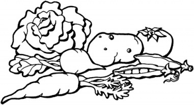 cabbage-1-coloring-page.gif