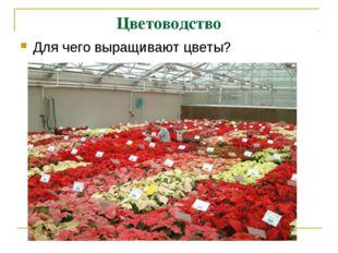 Цветоводство Для чего выращивают цветы?