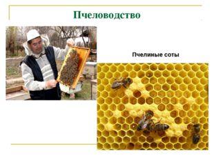 Пчеловодство Пчелиные соты