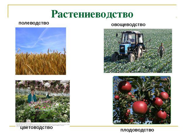 Растениеводство полеводство овощеводство цветоводство плодоводство