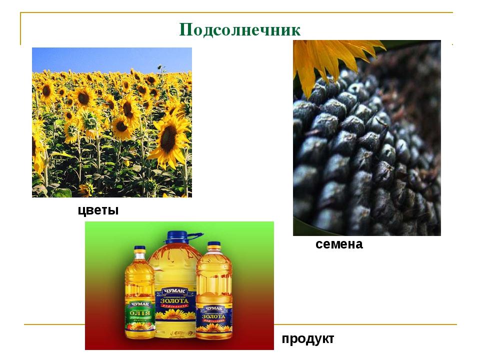 Подсолнечник семена цветы продукт