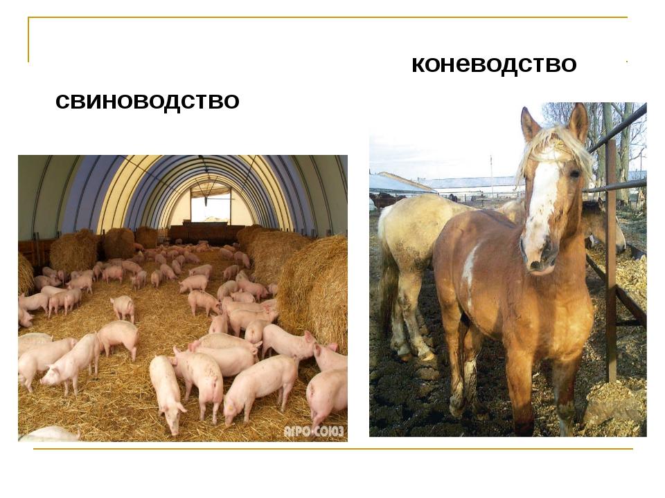 свиноводство коневодство