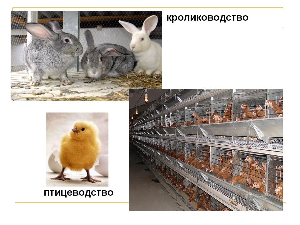 кролиководство птицеводство