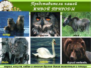 марал, косуля, кабан и многие другие дикие животные и птицы Представители наш