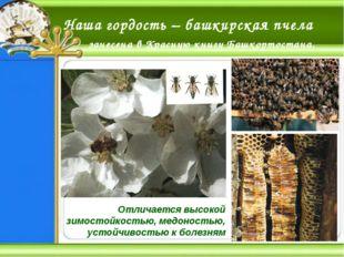 Наша гордость – башкирская пчела занесена в Красную книгу Башкортостана. Отли