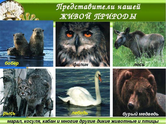 марал, косуля, кабан и многие другие дикие животные и птицы Представители наш...
