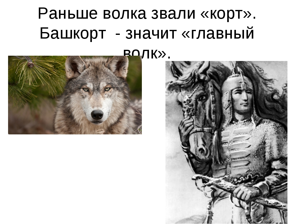Раньше волка звали «корт». Башкорт - значит «главный волк».