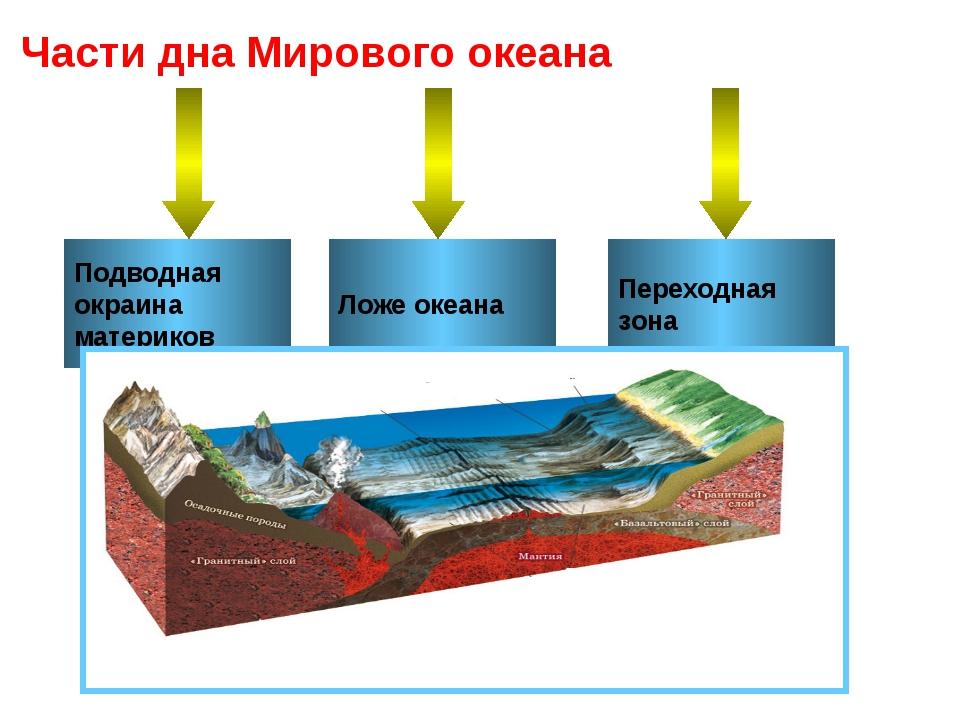 Подводная окраина материков Ложе океана Переходная зона Части дна Мирового ок...