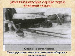ЗЕМЛЕДЕЛЬЧЕСКИЕ ОРУДИЯ ТРУДА. ВСПАШКА ЗЕМЛИ. Старорусская соха-рогалюха (по-с