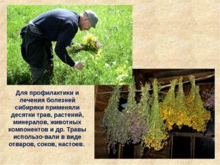 Для профилактики и лечения болезней сибиряки применяли десятки трав, растений