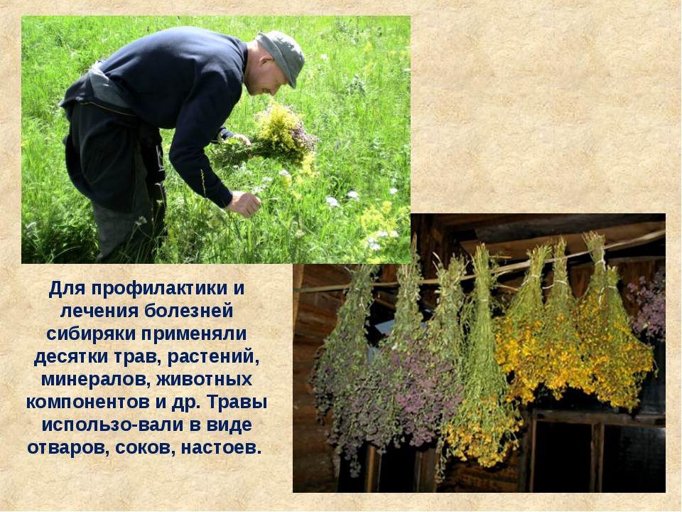 Для профилактики и лечения болезней сибиряки применяли десятки трав, растений...