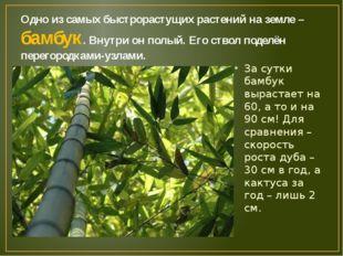 Одно из самых быстрорастущих растений на земле – бамбук. Внутри он полый. Его