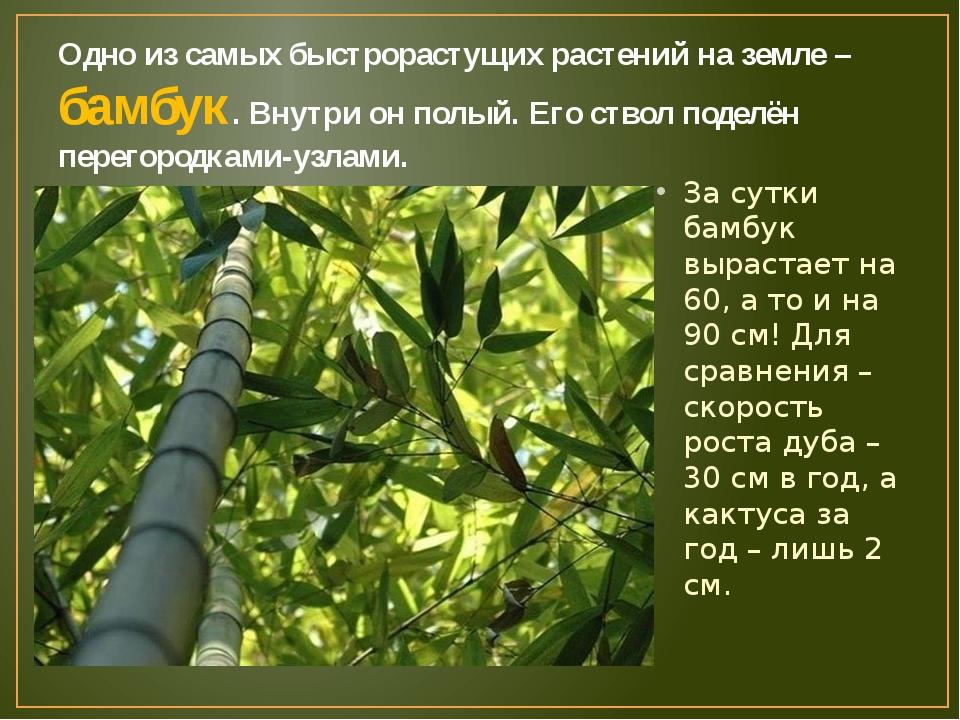Одно из самых быстрорастущих растений на земле – бамбук. Внутри он полый. Его...
