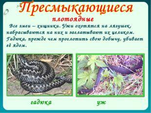 плотоядные Все змеи – хищники. Ужи охотятся на лягушек, набрасываются на них