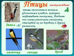 насекомоядные дрозд дятел ласточка синица птицы отличаются тонким, удлиненным