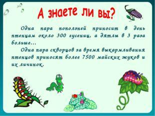 Одна пара поползней приносит в день птенцам около 300 гусениц, а дятлы в 3 ра