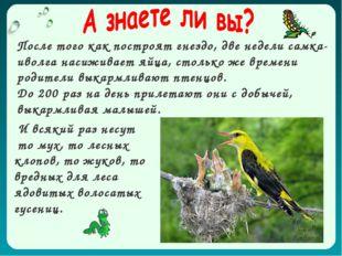 И всякий раз несут то мух, то лесных клопов, то жуков, то вредных для леса яд