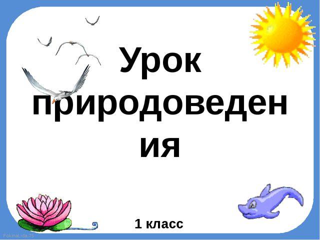 Урок природоведения 1 класс FokinaLida.75