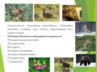 Растительность заповедника разнообразна. Ландшафты включают сосновые леса, бо