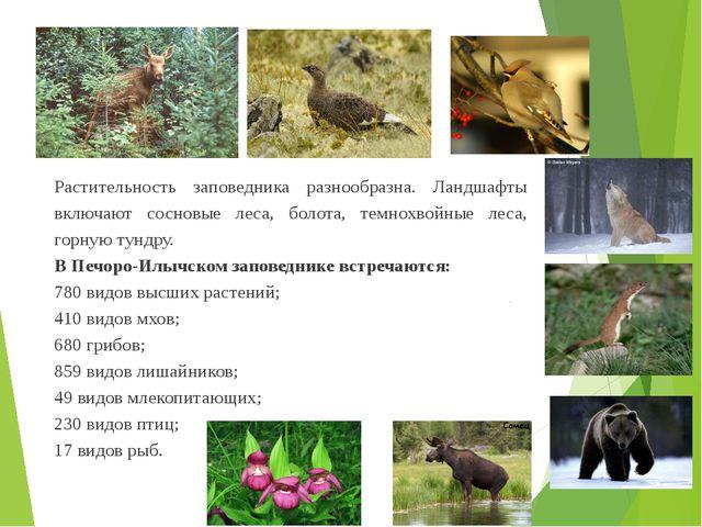 Растительность заповедника разнообразна. Ландшафты включают сосновые леса, бо...