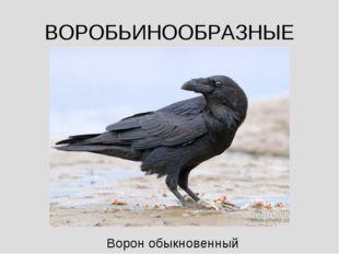 ВОРОБЬИНООБРАЗНЫЕ Ворон обыкновенный