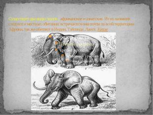 Существует два вида слонов : африканские и азиатские. Из их названия следуют