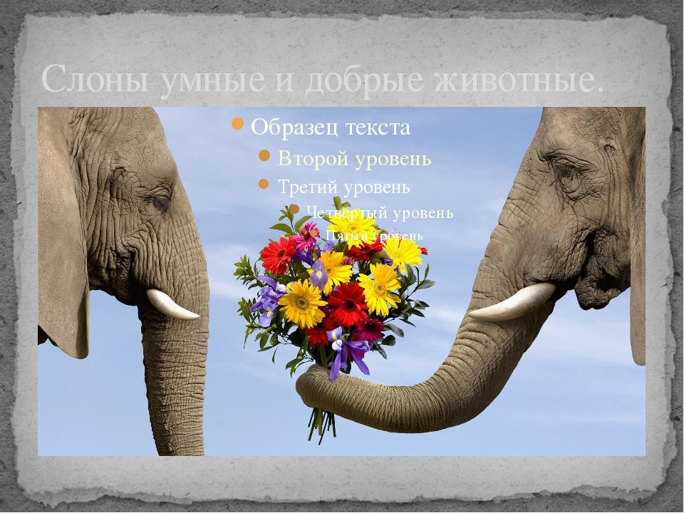 Слоны умные и добрые животные.