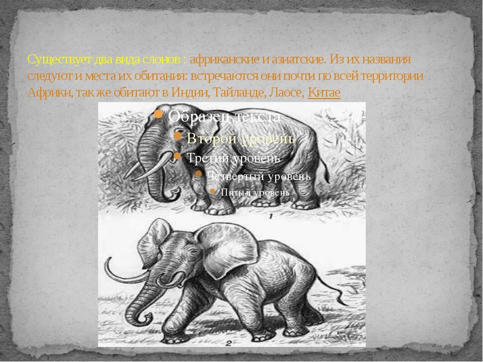 Существует два вида слонов : африканские и азиатские. Из их названия следуют...