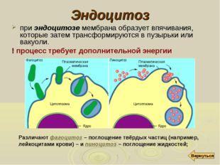 Эндоцитоз при эндоцитозе мембрана образует впячивания, которые затем трансфор