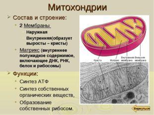 Митохондрии Состав и строение: 2 Мембраны Наружная Внутренняя(образует вырост