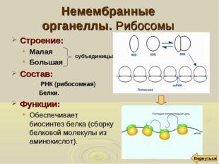 Немембранные органеллы. Рибосомы Строение: Малая Большая Состав: РНК (рибосом