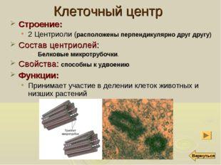 Клеточный центр Строение: 2 Центриоли (расположены перпендикулярно друг другу