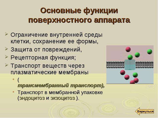 Основные функции поверхностного аппарата Ограничение внутренней среды клетки,...