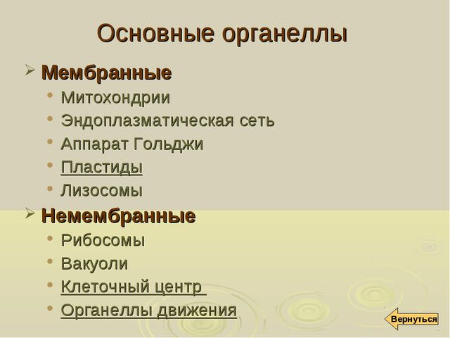 Основные органеллы Мембранные Митохондрии Эндоплазматическая сеть Аппарат Гол...