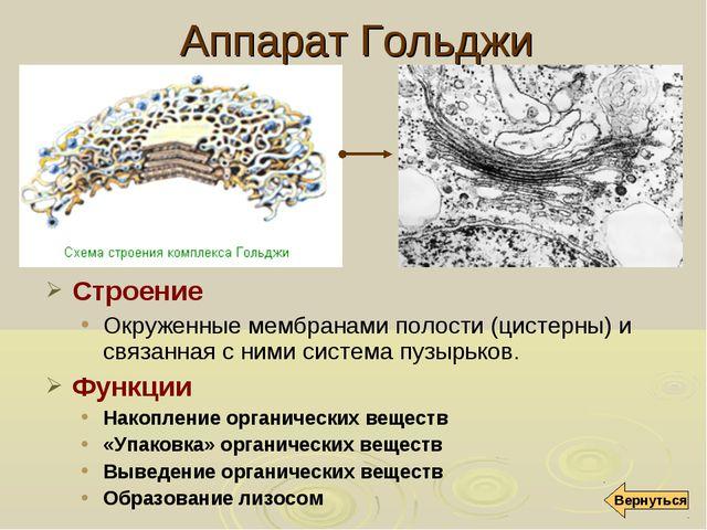 Аппарат Гольджи Строение Окруженные мембранами полости (цистерны) и связанная...