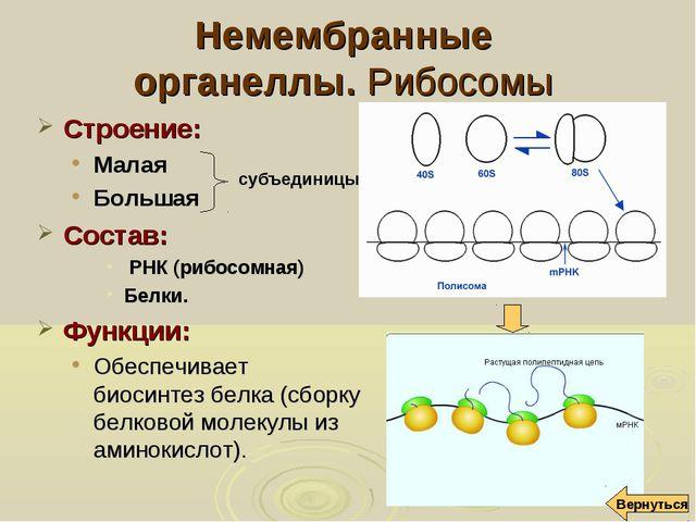 Немембранные органеллы. Рибосомы Строение: Малая Большая Состав: РНК (рибосом...