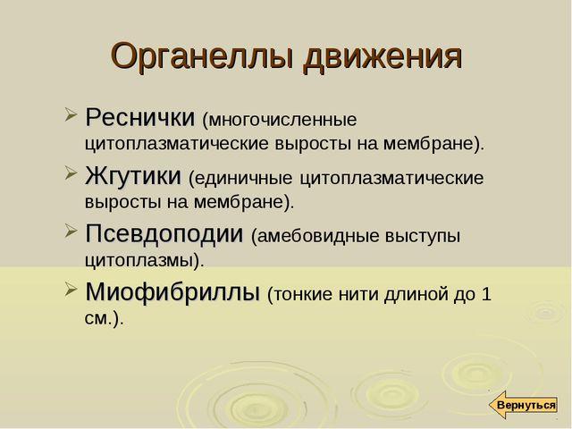 Органеллы движения Реснички (многочисленные цитоплазматические выросты на мем...