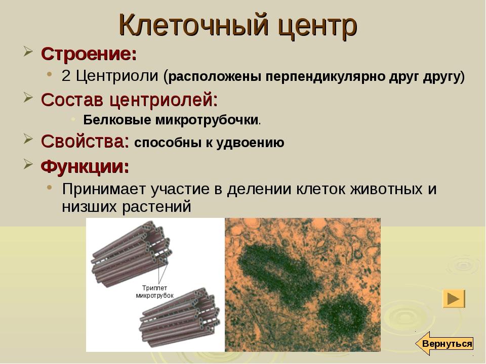 Клеточный центр Строение: 2 Центриоли (расположены перпендикулярно друг другу...