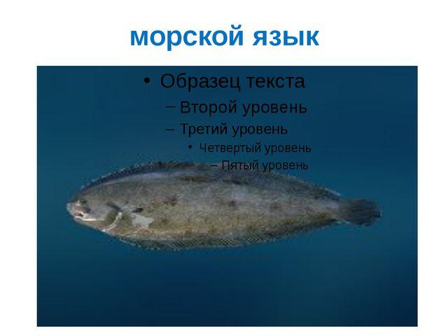морской язык