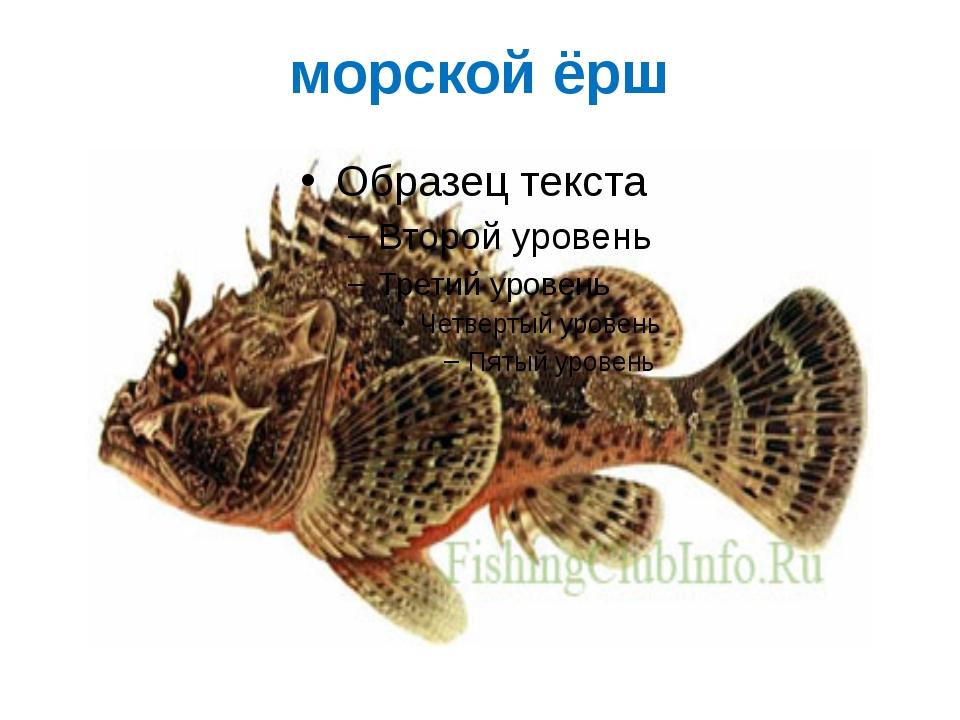 морской ёрш