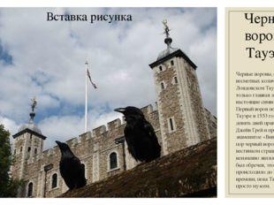 Черные вороны Тауэра Черные вороны, обитающие в несметных количествах в Лондо