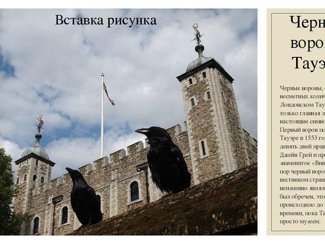 Черные вороны Тауэра Черные вороны, обитающие в несметных количествах в Лондо...