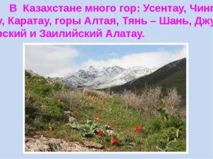 В Казахстане много гор: Усентау, Чингиз- тау, Каратау, горы Алтая, Тянь – Ша