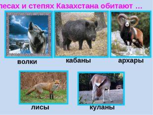 В лесах и степях Казахстана обитают … волки кабаны архары лисы куланы