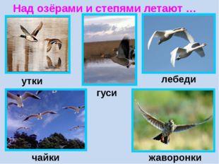 Над озёрами и степями летают … утки гуси лебеди чайки жаворонки