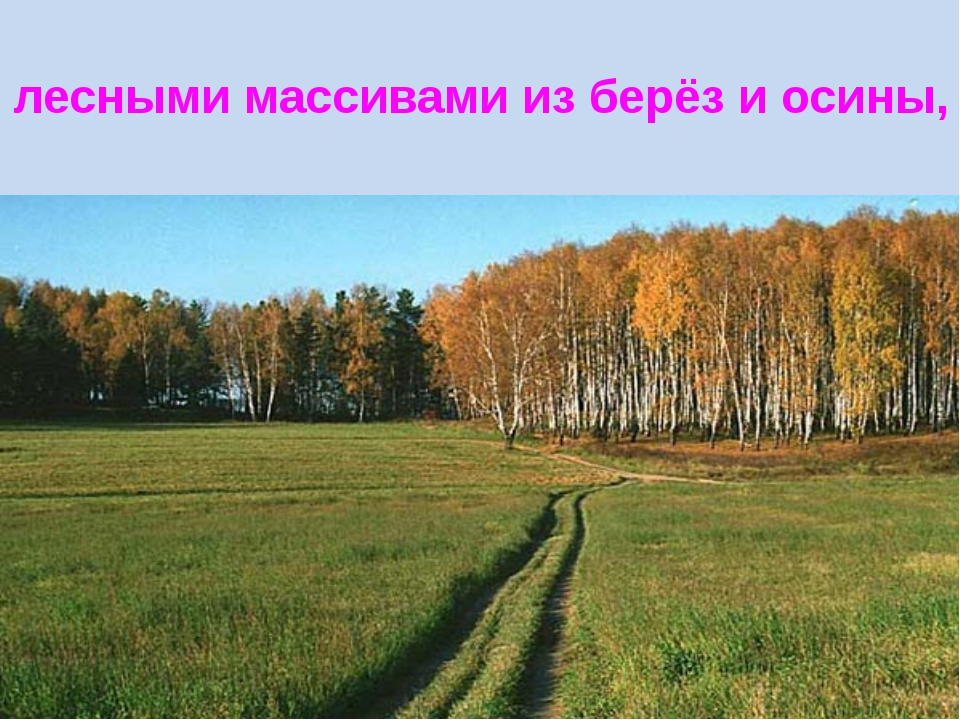 лесными массивами из берёз и осины,
