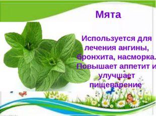 Мята Используется для лечения ангины, бронхита, насморка. Повышает аппетит и